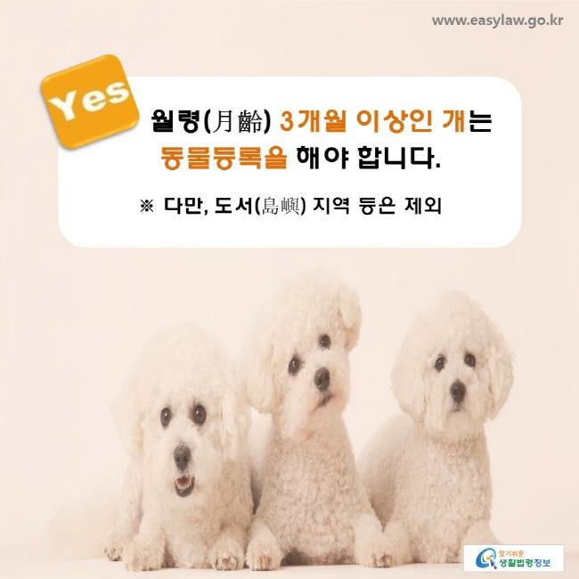 YES, 월령(月齡) 3개월 이상인 개는 동물등록을 해야 합니다. ※ 다만, 도서(島嶼) 지역 등은 제외