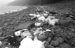 해안에 1회용품이 쌓여있는 사진입니다.